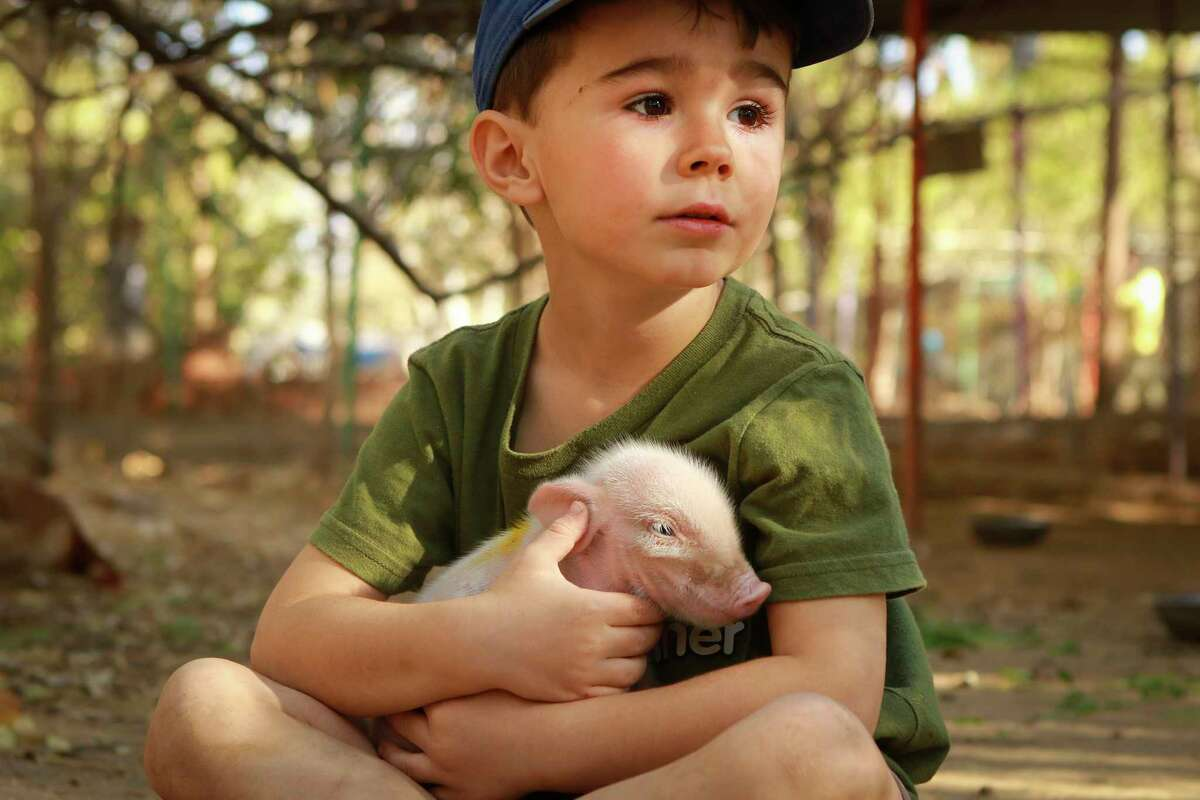Max Murphy, seen here at age 5, is an 8-year-old animal rights activist from Ontario, Canada. He has been raised vegan and has attended protests against the fur industry and marine parks.