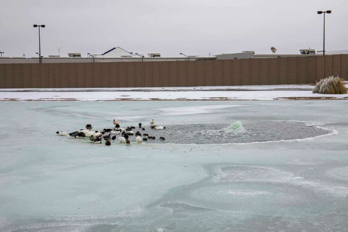 Ducks find access to open water Wednesday, Feb. 17, 2021 at C.J. Kelly Park. Jacy Lewis/ Reporter-Telegram