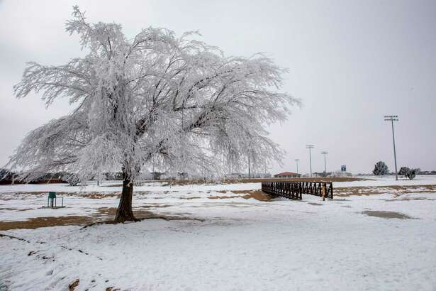 Trees are covered in ice Wednesday, Feb. 17, 2021 at C.J. Kelly Park. Jacy Lewis/ Reporter-Telegram