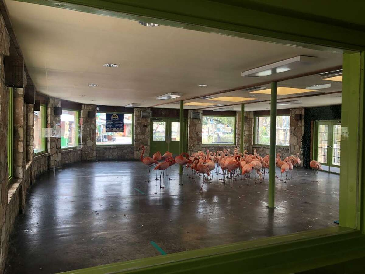 The staff also relocated its flamingos, King Vultures, and Toucans into its Riverview restaurant and other indoor areas at the zoo. Both areas will be closed to the public this weekend, the zoo said.