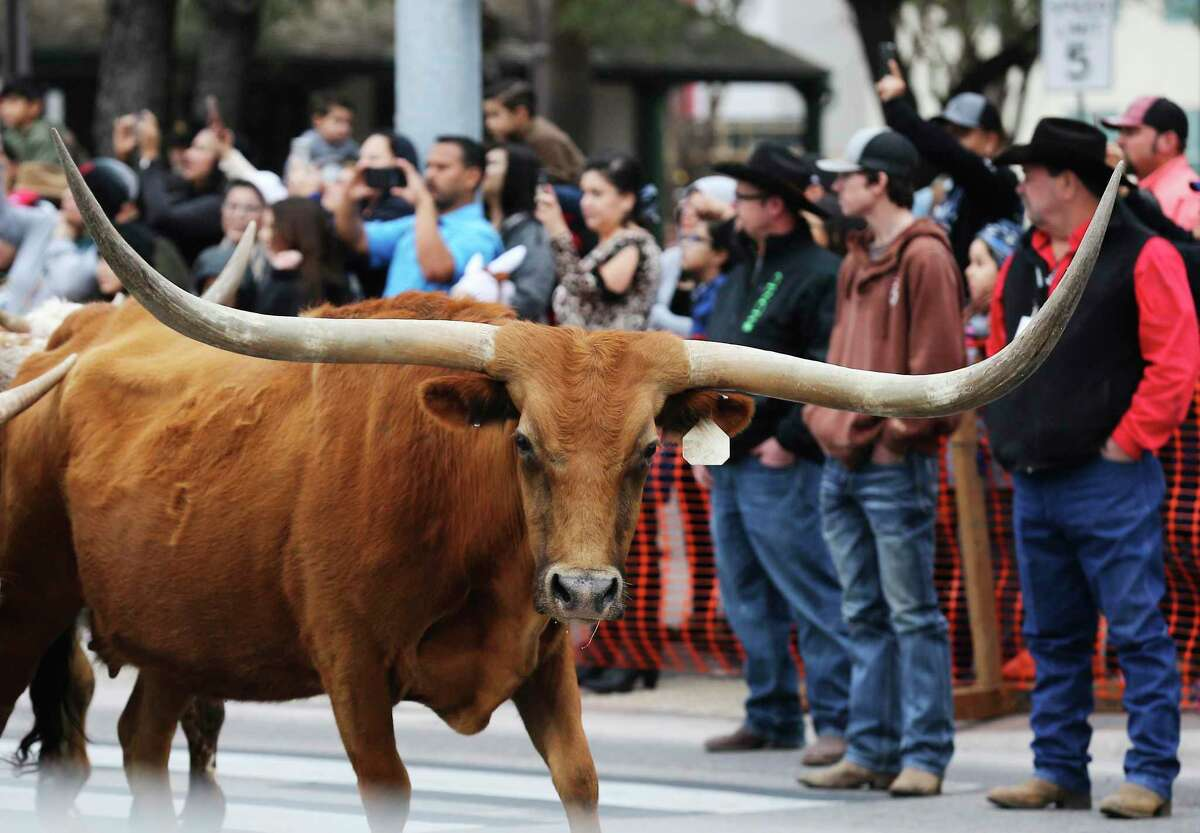 The annual Western Heritage parade and cattle drive herds onlookers along Houston and Alamo Streets as longhorns moseyed along downtown and past the Alamo on Saturday, Feb. 3, 2018. The event usually kicks off the annual San Antonio Stockshow & Rodeo.