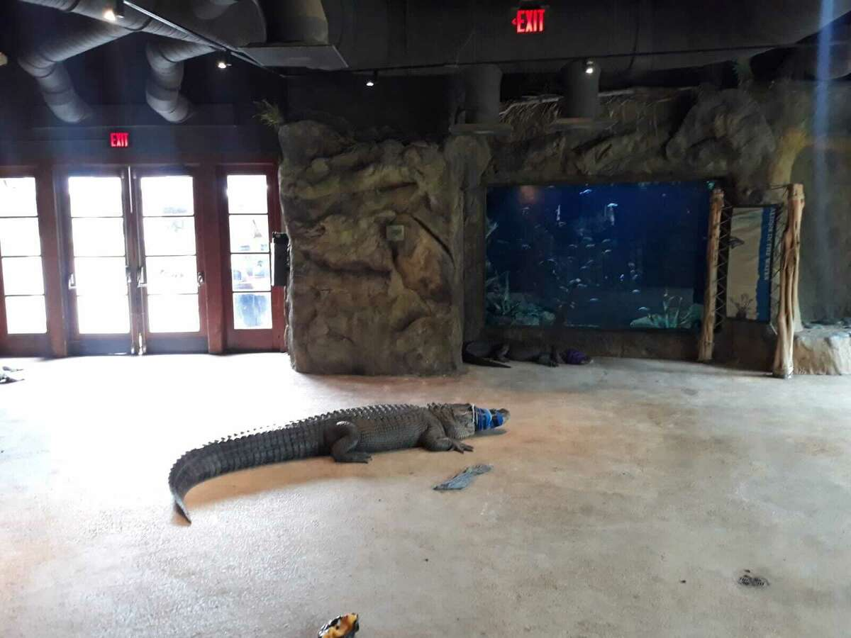 If you're ready to get out and see some animals, the San Antonio Zoo has you covered with its reopening on Saturday.