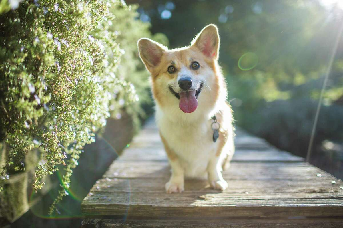 Training your dog can help them bond with you and make them happier.