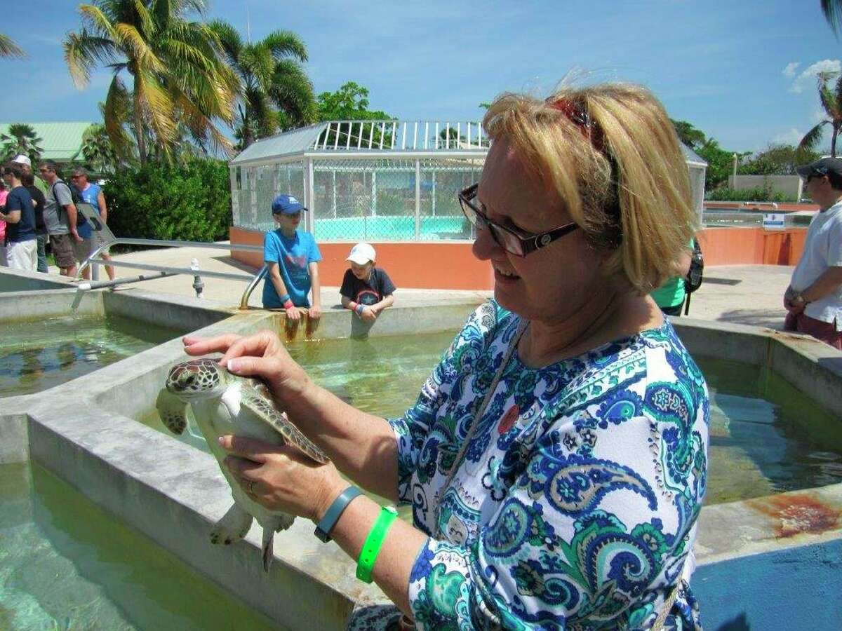 Ginny Lounsbury admires a young sea turtle during a stop on a Caribbeancruise. (Tom Lounsbury/Hearst Michigan)