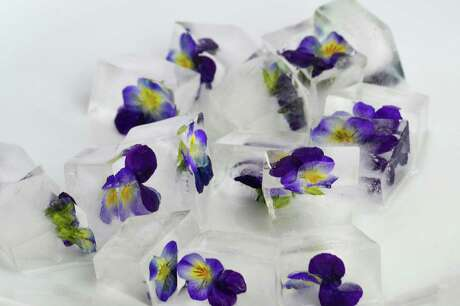 This year's freeze-damaged pansies are unlikely to stay in bloom.
