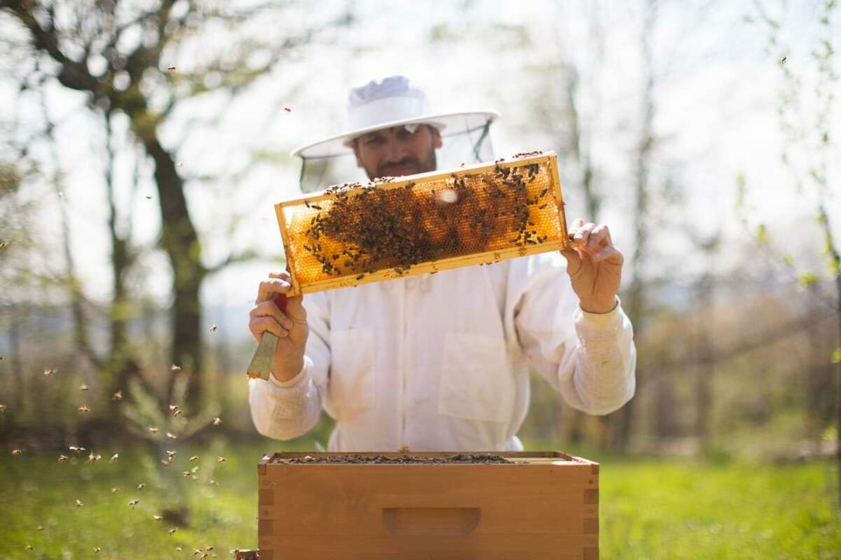 Beekeeper Dan Carr of Beavertides Farm.