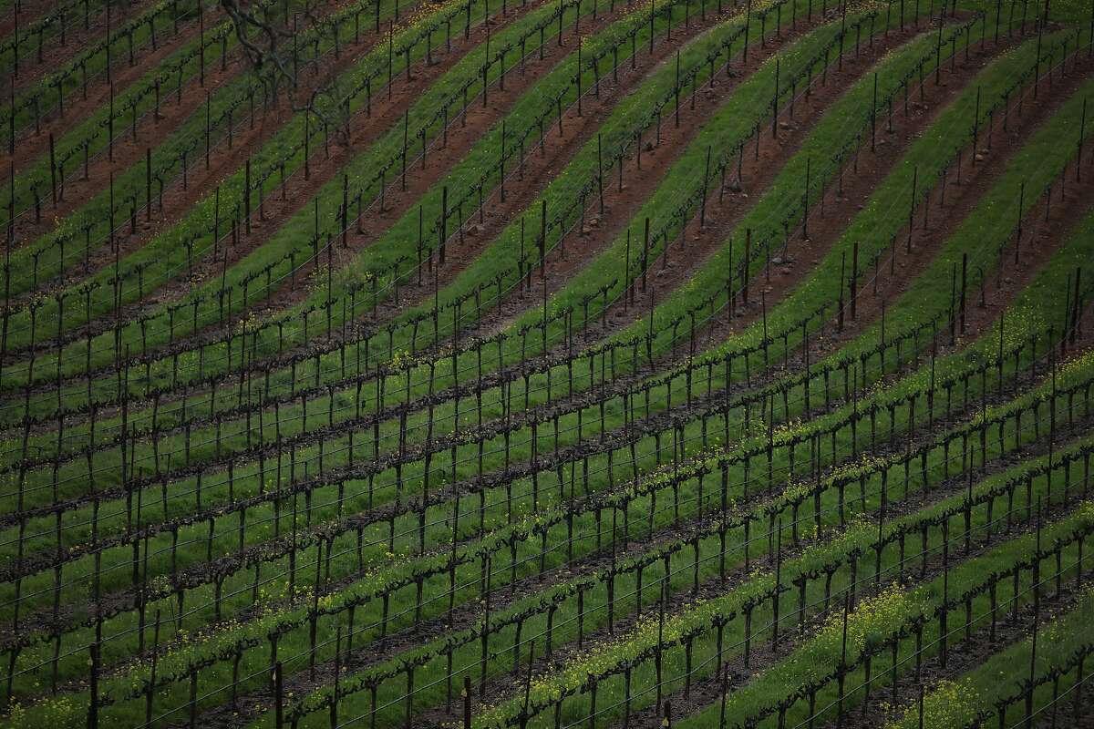 BR Cohn Winery in Glen Ellen.