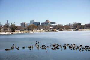 Ducks have found open water as the sun shines Friday, Feb. 19, 2021 at Wadley-Barron Park.   Jacy Lewis/ Reporter-Telegram