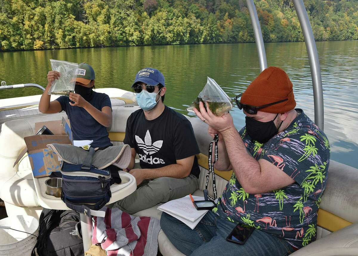 From left, WCSU graduate students Maricris Rivera of New Britain, Robert Mordente of New Milford, and JD Hannon of Danbury, examine samples of aquatic plants collected from a site at Lake Lillinonah.