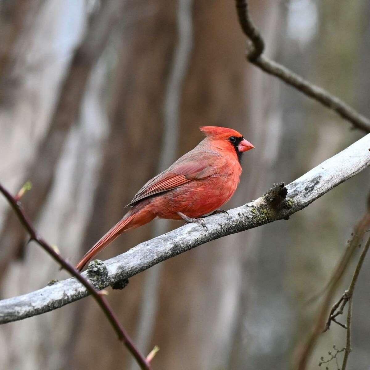 Sam Nunes, an environmental educator at the Woodcock Nature Center in Wilton, Conn. writes this regular column titled: