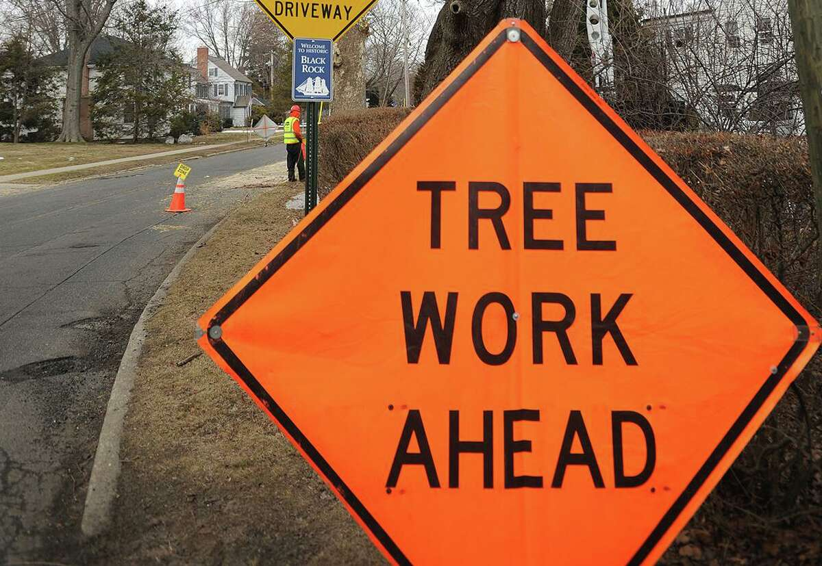 A file photo of a tree service crew cutting down a tree in Bridgeport, Conn.