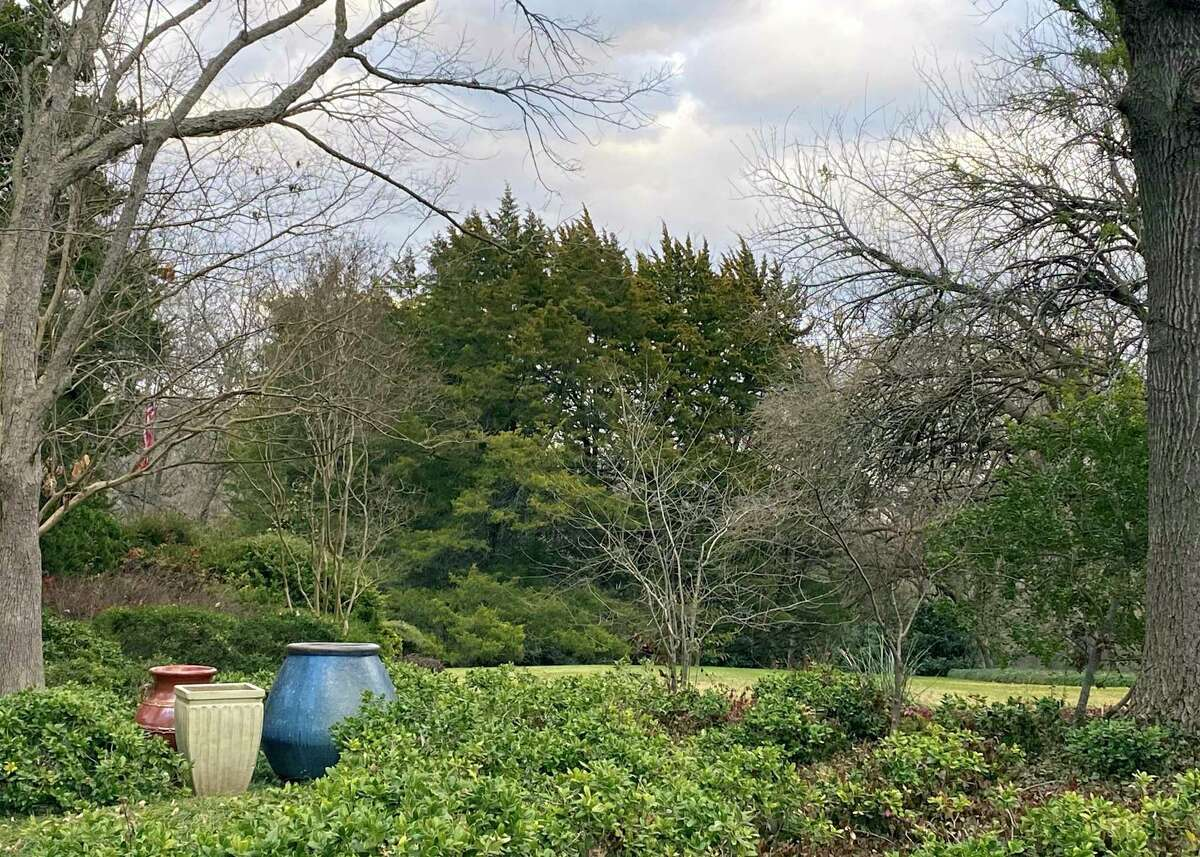 Eastern redcedar (Juniperus virginiana) is the native conifer that grows over huge parts of Central and East Texas, bedeviling allergy sufferers. But Neil Sperry has kept several on his land.