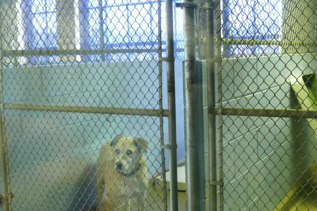 """The New Canaan animal shelter is not fit for a dog, or cat, and Selectmen Nick Williams called it a """"dump in the dump."""" The Board of Selectmen will be studying the issue on what to do to improve it. The picture was taken Nov. 4, 2019."""