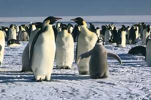 """Tensions rise in """"March of the Penguins"""" as participants of the planned journey realize they all wore the same outfits."""