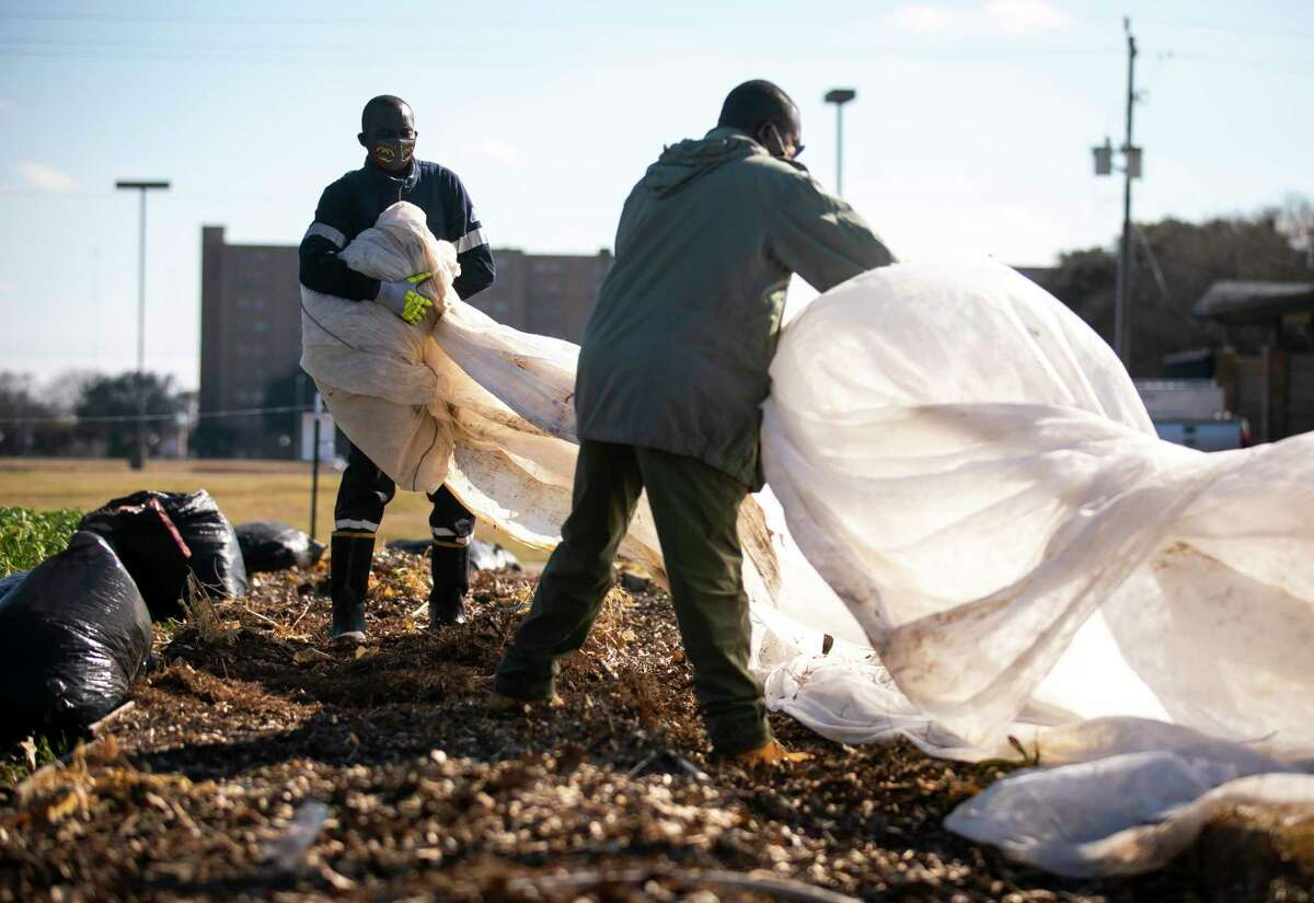 Plant It Forward farmers Constant Ngouala and Guy Moulet lift protective sheets to survey both damaged and salvageable produce at the PIF Braeswood Church location on Saturday, Feb. 20, 2021.