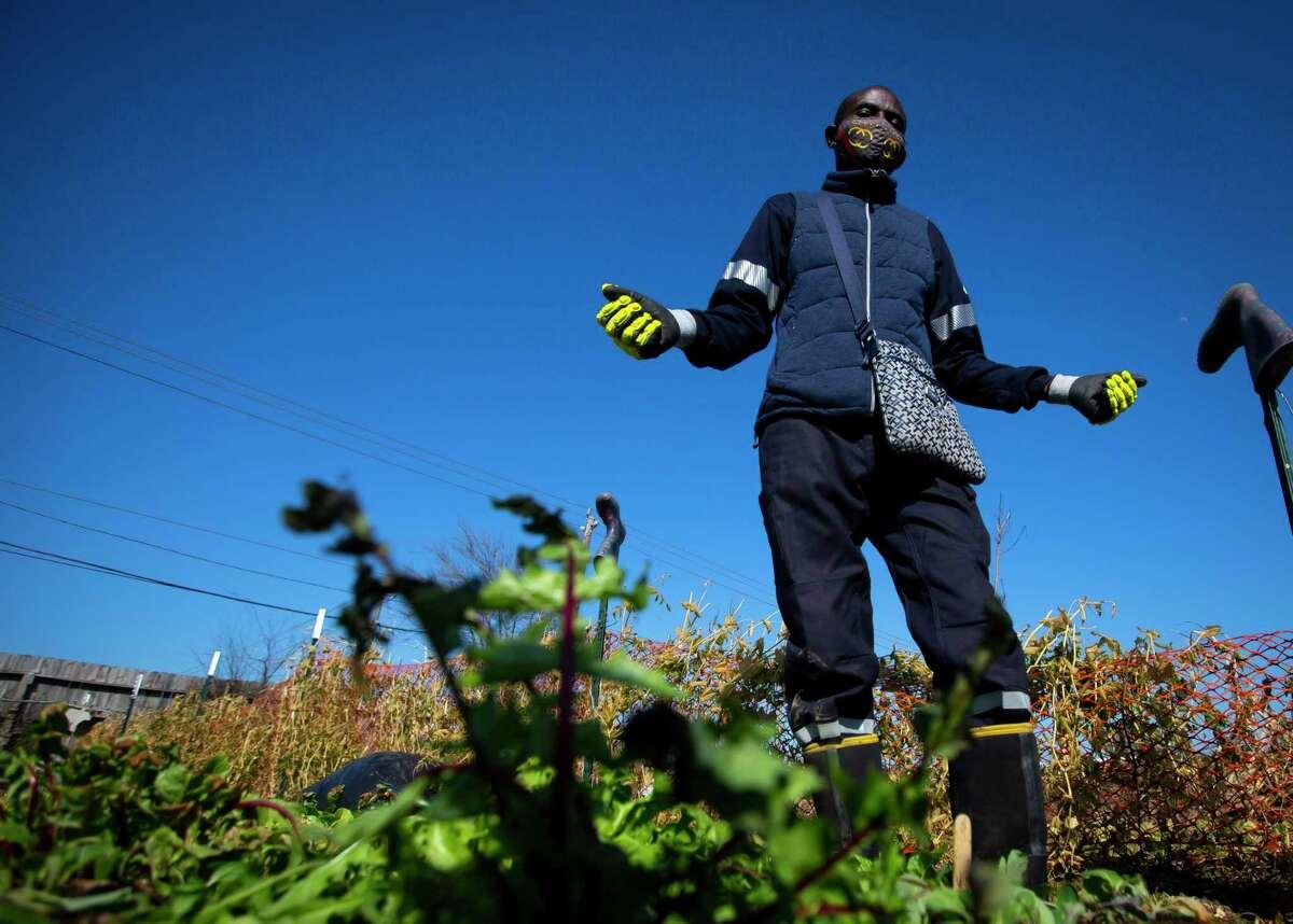 Plant It Forward farmer and chef Constant Ngouala surveys his farmland at the PIF Braeswood Church location on Saturday, Feb. 20, 2021.