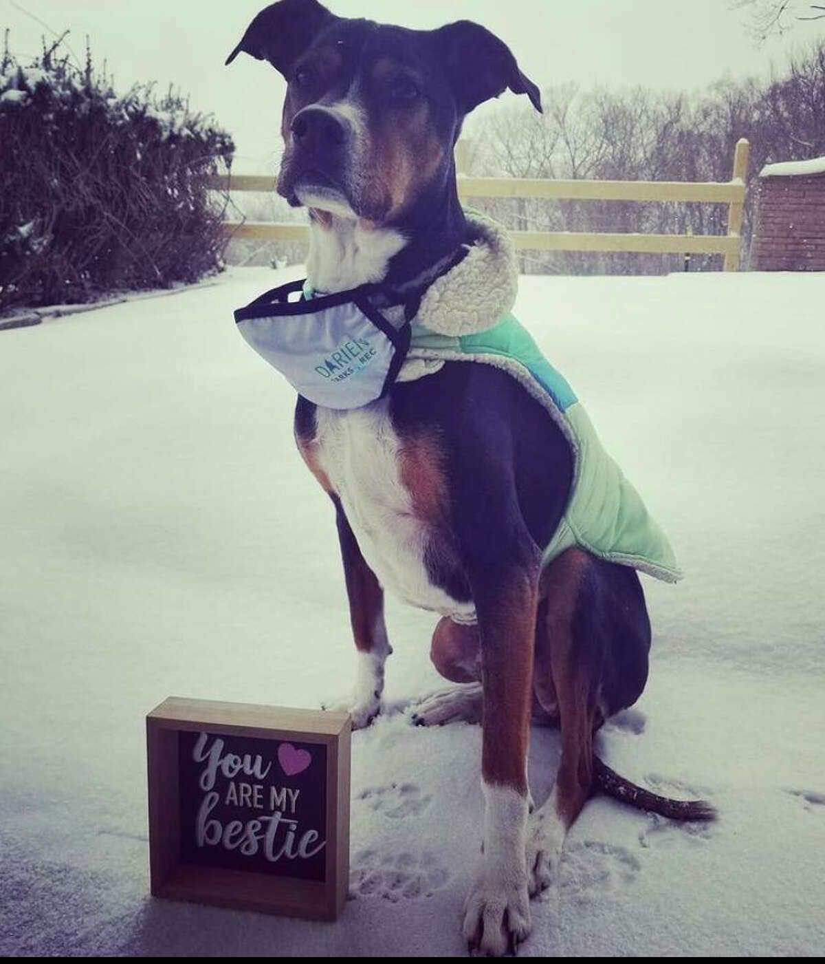 """Darien Parks & Recreation's mascot, Peanut, kicks off the department's social media campaign, """"Darien Digs Dogs,"""" asking residents to share photos on social media of their furry friends, including monthly themes."""