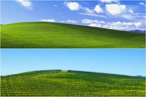 """Bliss"" hill, located in Sonoma, Calif. off Hwy 12, is the subject of one of the world's most viewed photos: Windows XP's default desktop wallpaper (above). Today, the hill is covered in vineyard rows (below)."