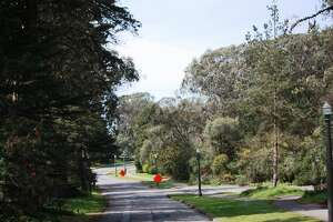 A view of a road in Golden Gate Park.