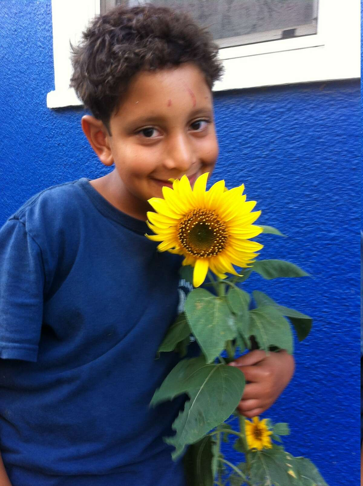 Aidan Fisher-Paulson poses with a sunflower he planted in the Bedlam Blue Bungalow.