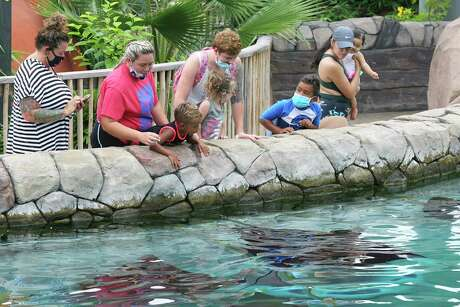 Visitors view stingrays in the Aquatica area as SeaWorld San Antonio entertains a limited amount of guests last July.