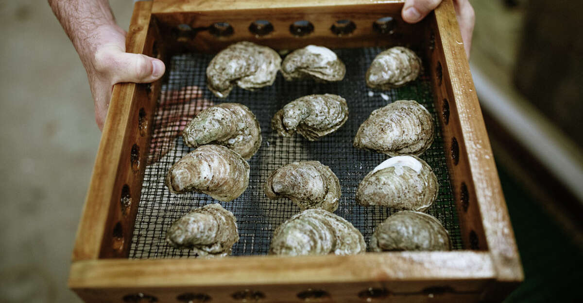 Oyster farming is a sustainable way to bring products to the half-shell market. Texas' industry is just beginning.