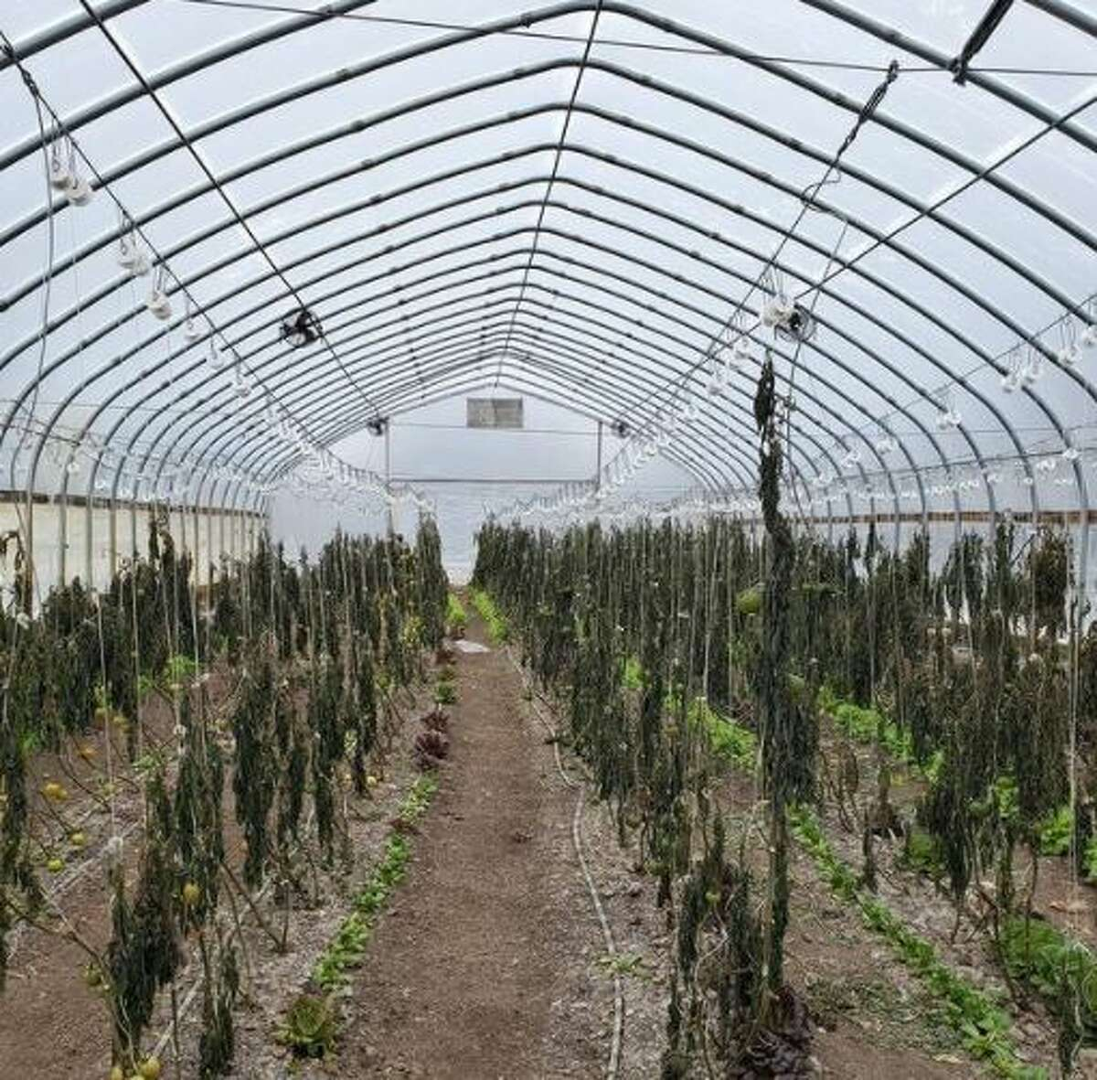 Cody Scott, owner of Green Bexar Farm in St. Hedwig, told MySA.com the power outages resulted in him losing 2,800 plants scattered throughout his two greenhouses.