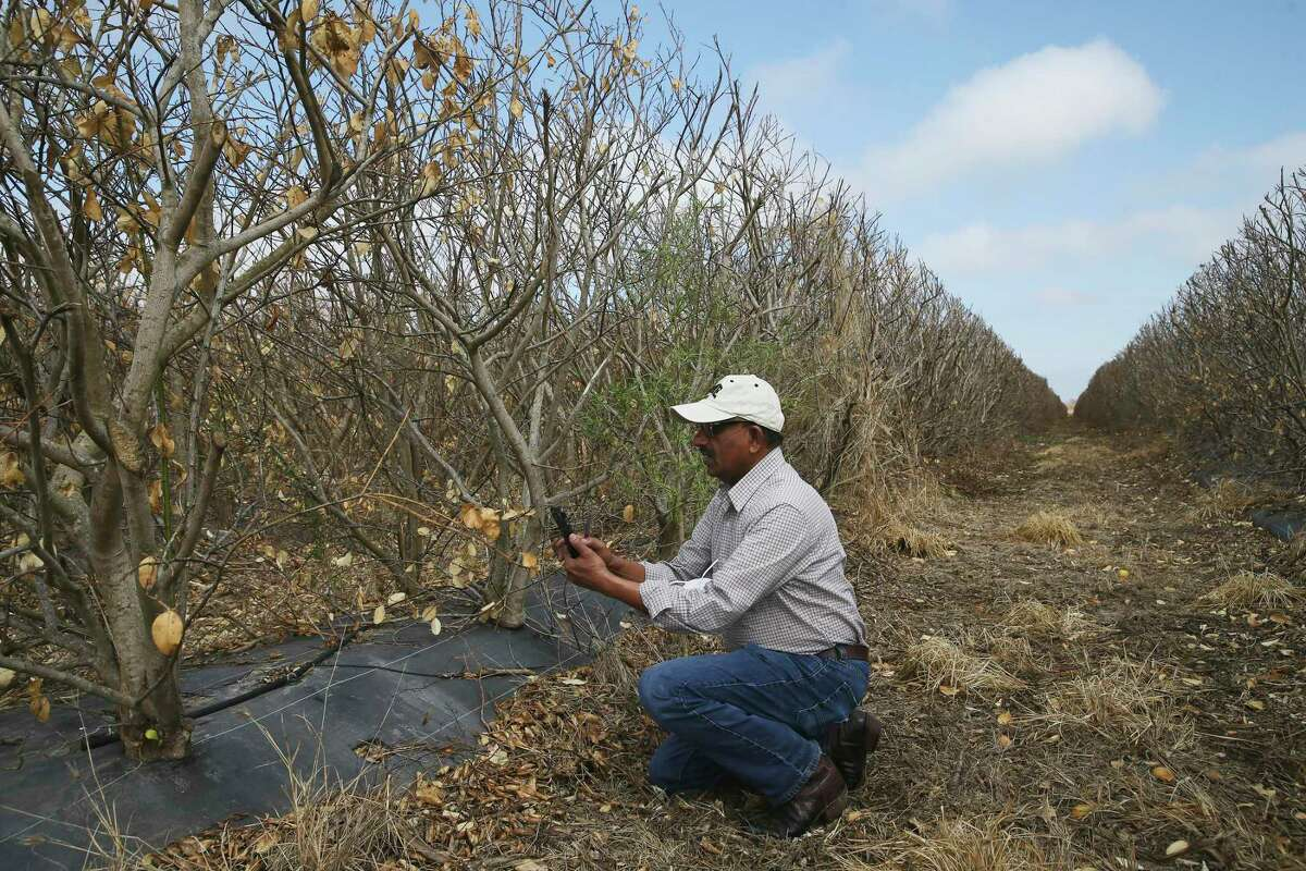Millions in damages: The Texas A&M AgriLife Extension Service estimates Texas farmers and ranchers lost $600 million to the storm - at minimum.