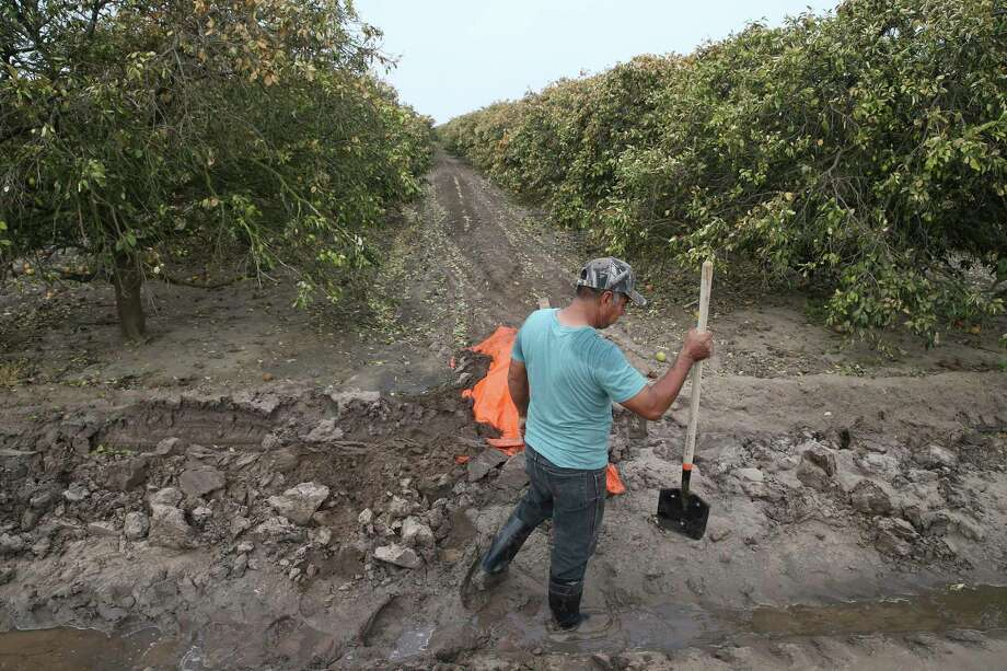 A man irrigates an orange orchard near Hargill, Texas, Tuesday, Feb. 23, 2021. The orchards showed signs of freeze damages from the recent extreme cold weather. Crops throughout the Rio Grande Valley sustained widespread damage due to the recent low temperatures. Photo: Jerry Lara, Staff / San Antonio Express-News / **MANDATORY CREDIT FOR PHOTOG AND SAN ANTONIO EXPRESS-NEWS/NO SALES/MAGS OUT/TV   © 2019 San Antonio Express-News