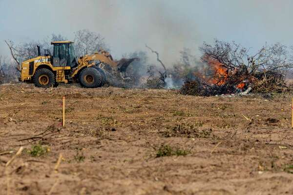 Citrus trees are burned Wednesday, Feb. 24, 2021, near Hargill in Hidalgo County. An estimated $300 million in citrus fruit has been destroyed due to last week's state-wide, multi-day deep freeze.