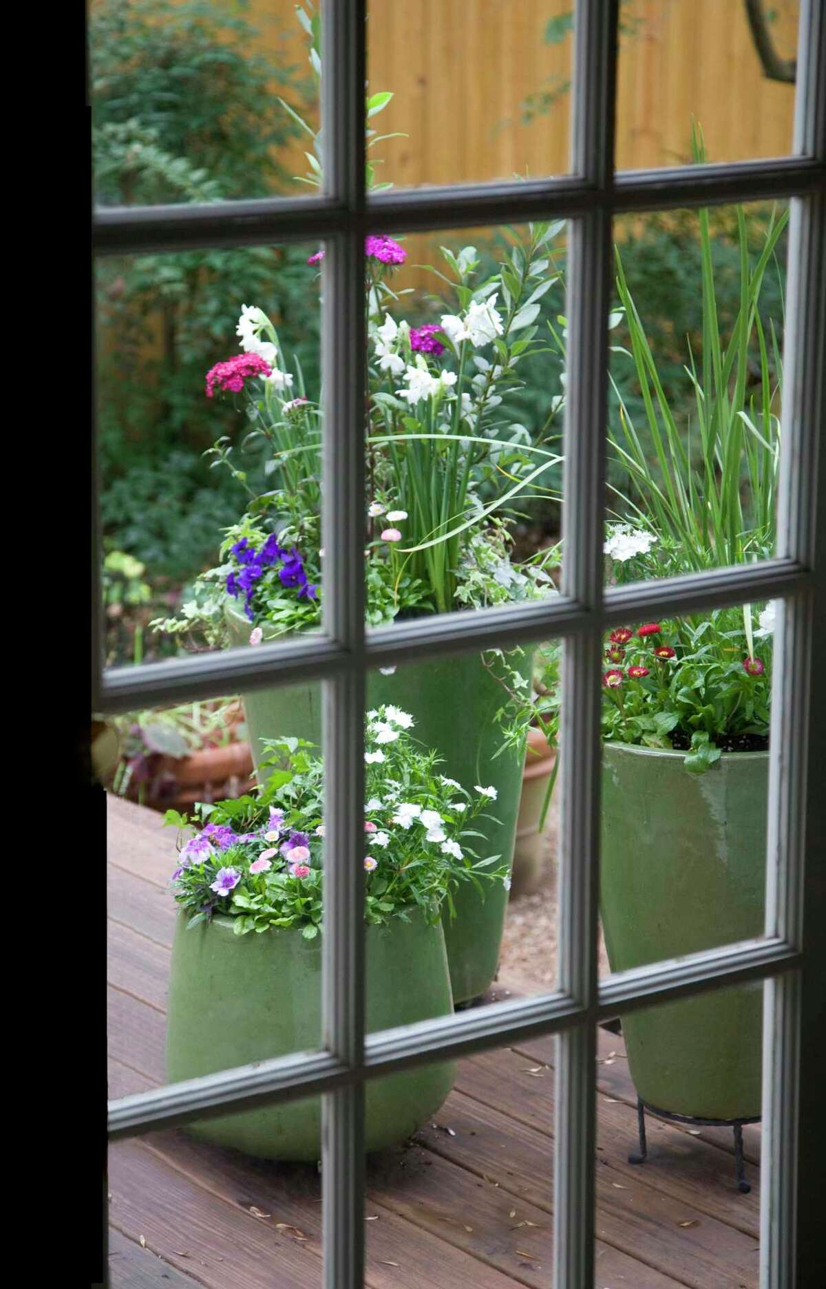 A trio of green pots packed with cool-season blooms just outside the kitchen door distracts from the freeze-dried of the garden beyond.