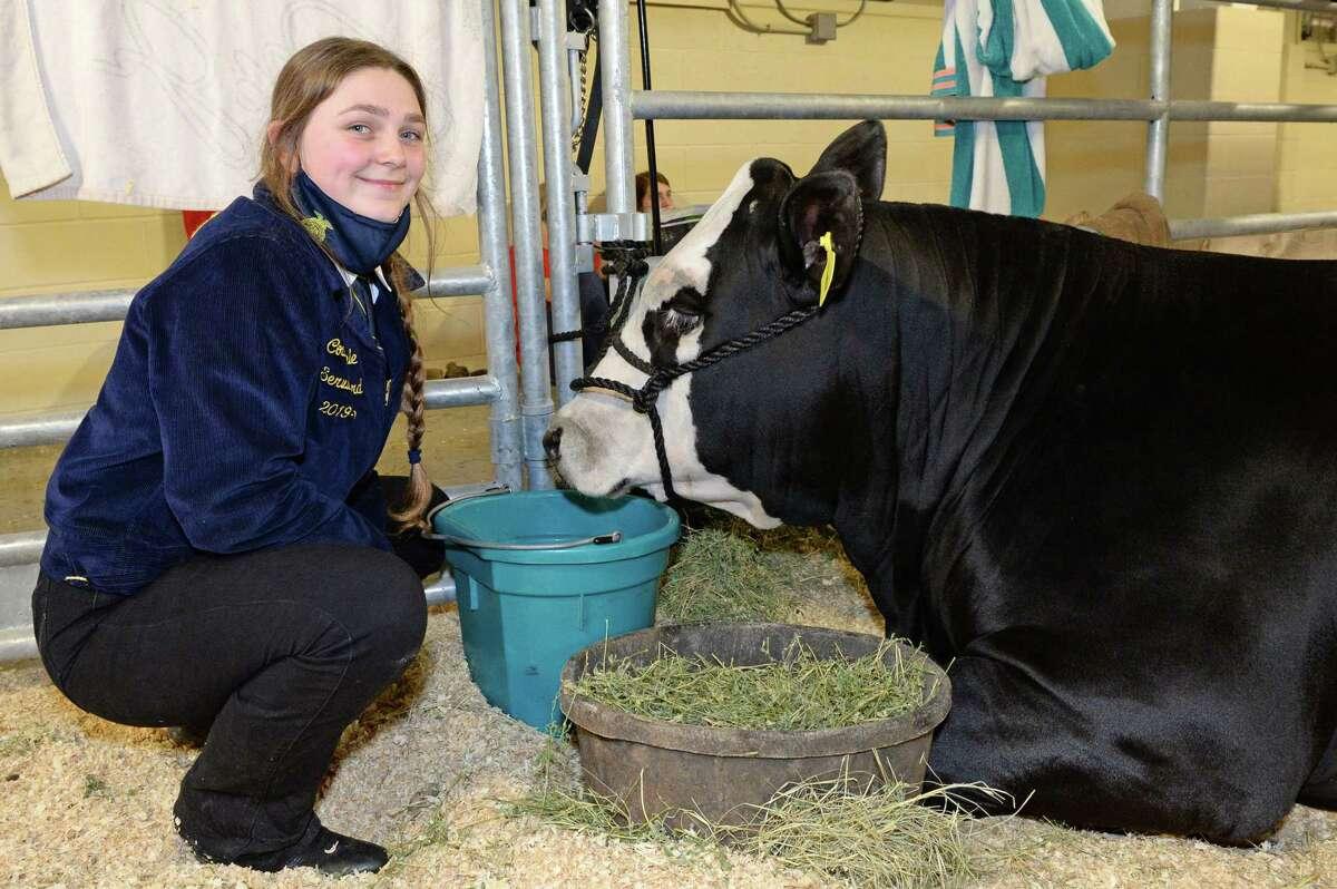 Courtney Cable of Katy High School gives her steer some water during the 78th Annual Katy ISD FFA Livestock Show on Thursday, Feb. 25, at the Gerald D. Young Agricultural Sciences Center in Katy.