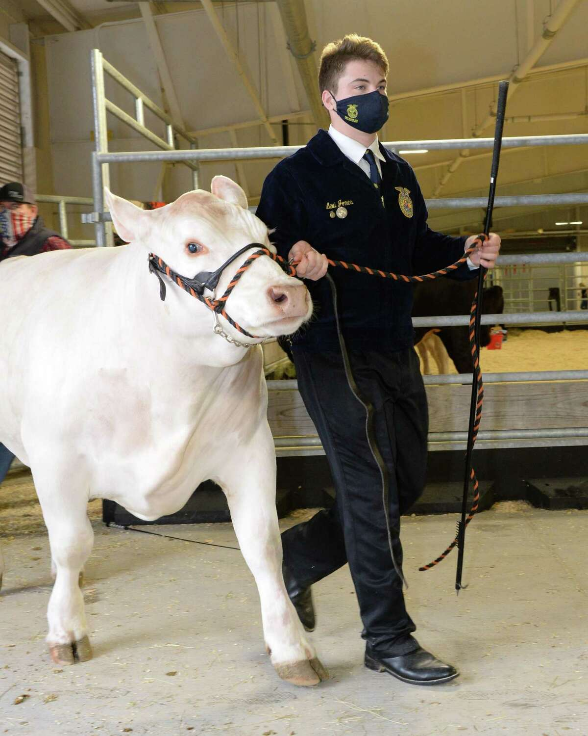 Levi Jones of Seven Lakes High School leads his steer to the arena during the 78th Annual Katy ISD FFA Livestock Show on Thursday, Feb. 25, at the Gerald D. Young Agricultural Sciences Center in Katy.