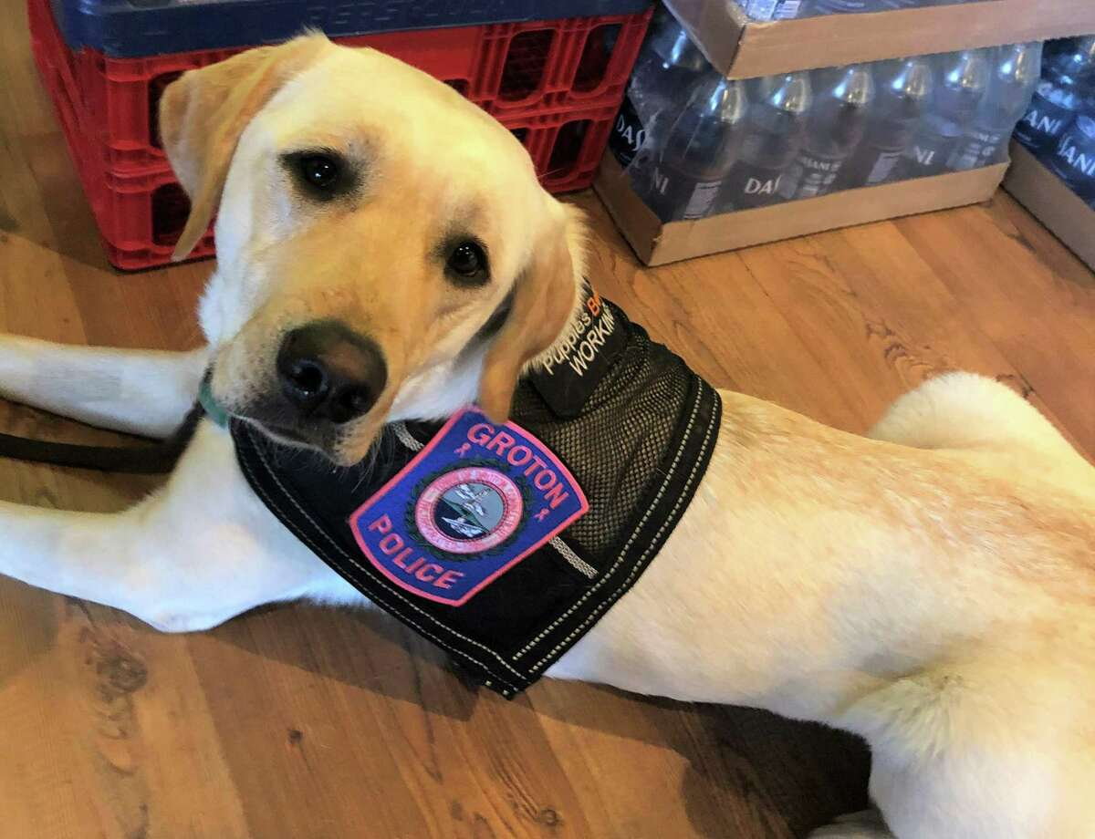 Chase is the Groton Police Department's crisis therapy dog.