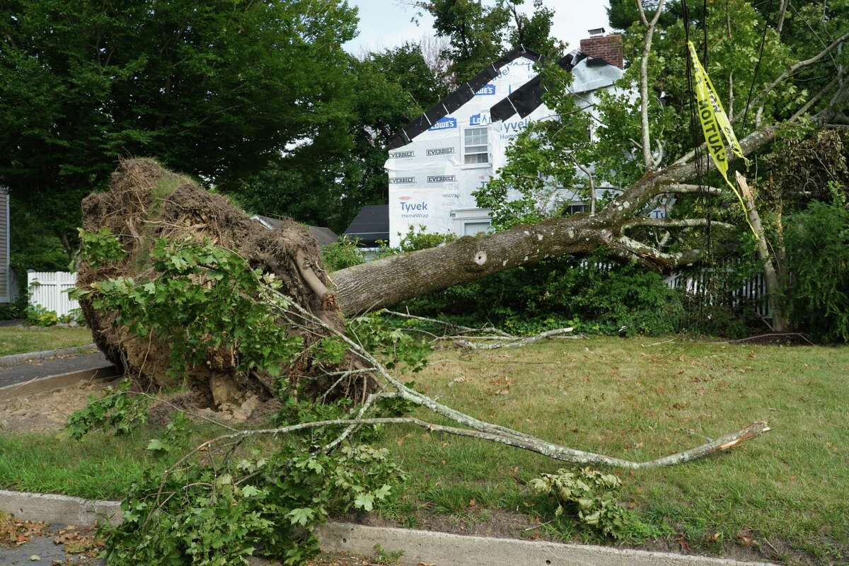 Damage from Tropical Storm Isaias could still be seen in New Canaan on Monday Aug. 10, 2020 nearly a week after the brief but fierce storm rolled through. This picture was taken Sunday, but the tree was still seen on RIchmond Hill Road Monday morning.
