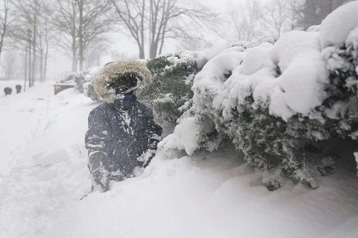 Arturo Diaz, 4, enjoys playing in a deep snow bank. With leafy branches in winter, evergreens are especially good at catching snow, which can be bent, even broken by a heavy snow load.