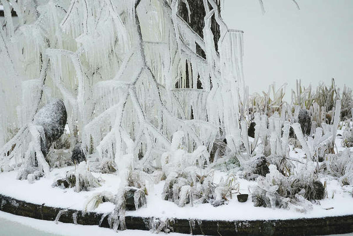 For existing at-risk plants, forget about shoveling your walkways when you see snow starting to accumulate. Instead, run outside with your broom to brush snow from plant limbs. Don't knock the branches and don't bother with them at all if ice has formed, or they might snap off. Sweep snow gently upward and off.