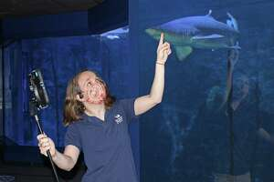 Maritime Aquarium educator Bridget Cervero presents the aquarium's sand tiger sharks to a virtual class in Turkey.