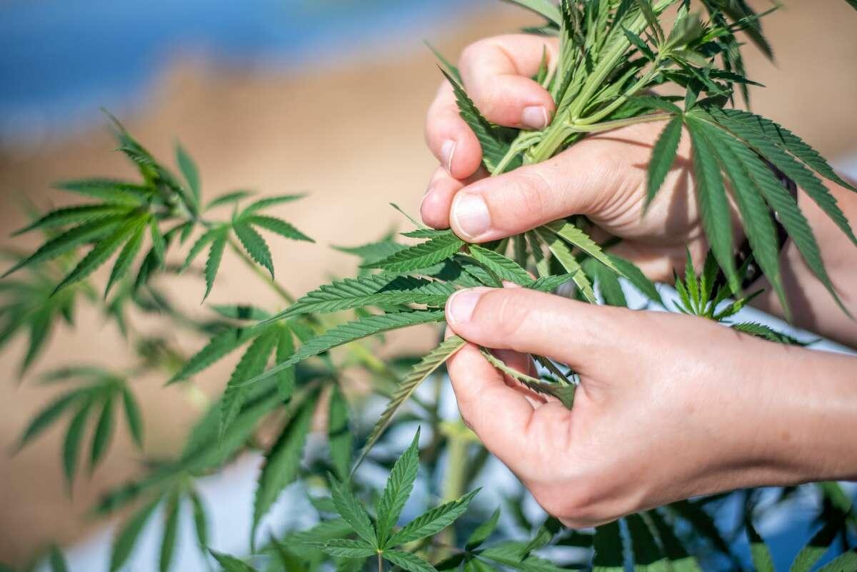 Another bill proposing marijuana legalization has been filed in the Texas Legislature.