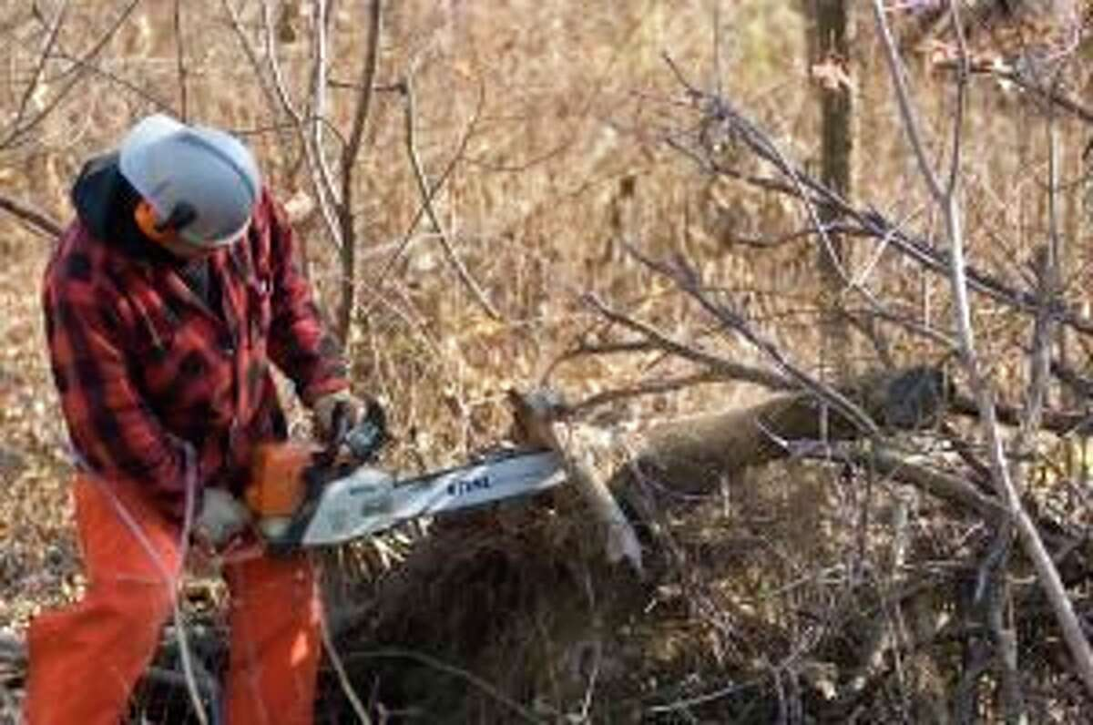 A man uses a chainsaw to cut downed, dead wood from a state forest.