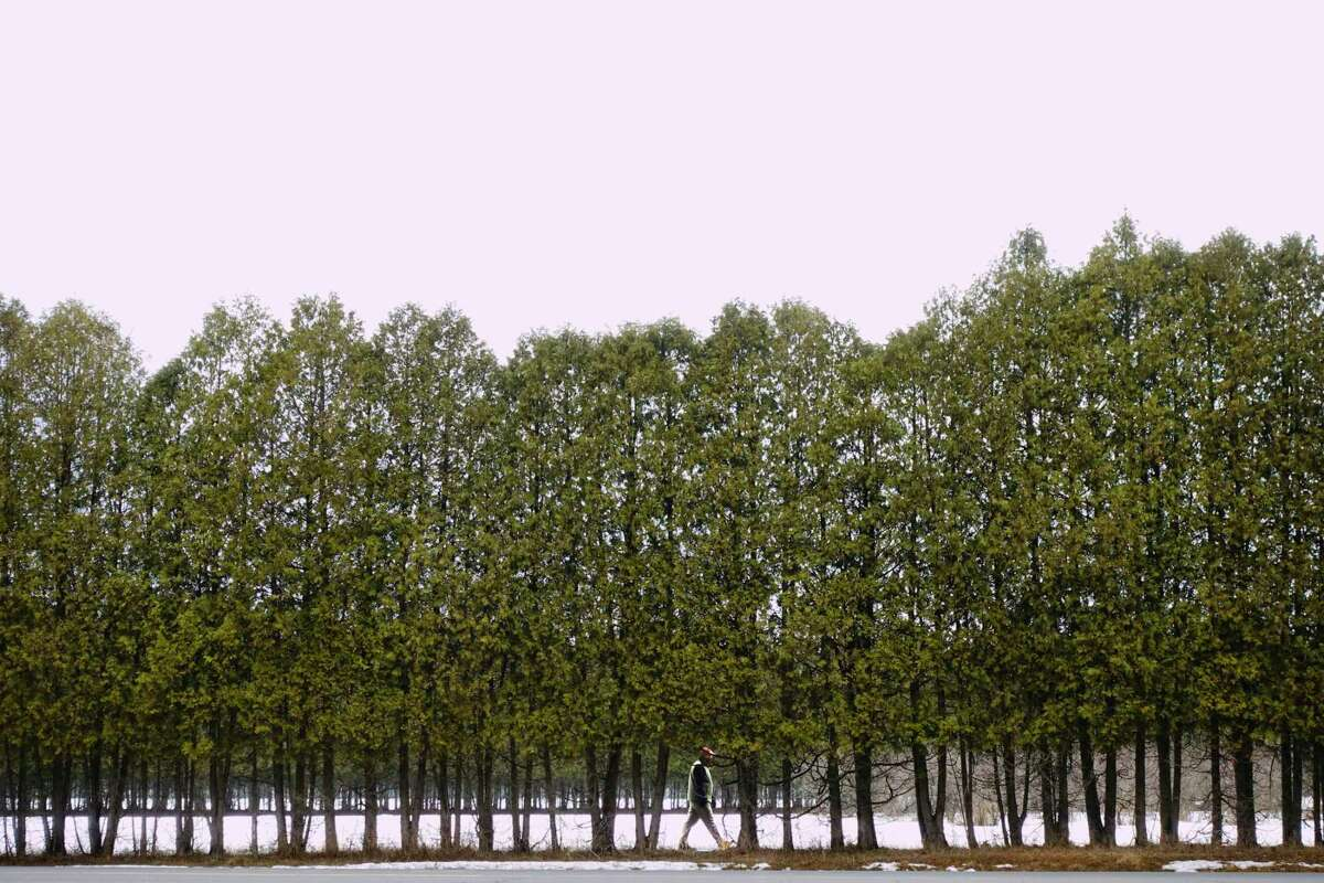 A man walks along a path behind a line of trees on Monday, March 1, 2021, in Saratoga Springs, N.Y. (Paul Buckowski/Times Union)