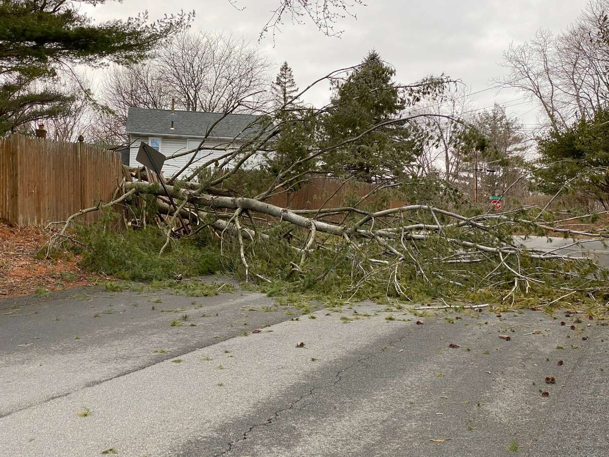 High winds knocked over a tree on Meadow Lane in Albany on Monday.