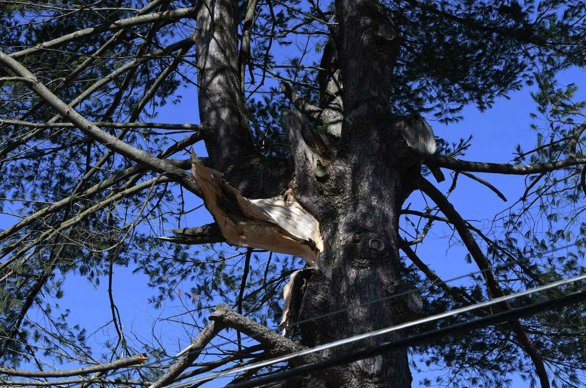 The wound from a severed branch scars a pine tree on Lake Place after high winds caused damage throughout the Capital Region on Tuesday morning, March 2, 2021, in Delmar, N.Y. (Will Waldron/Times Union)