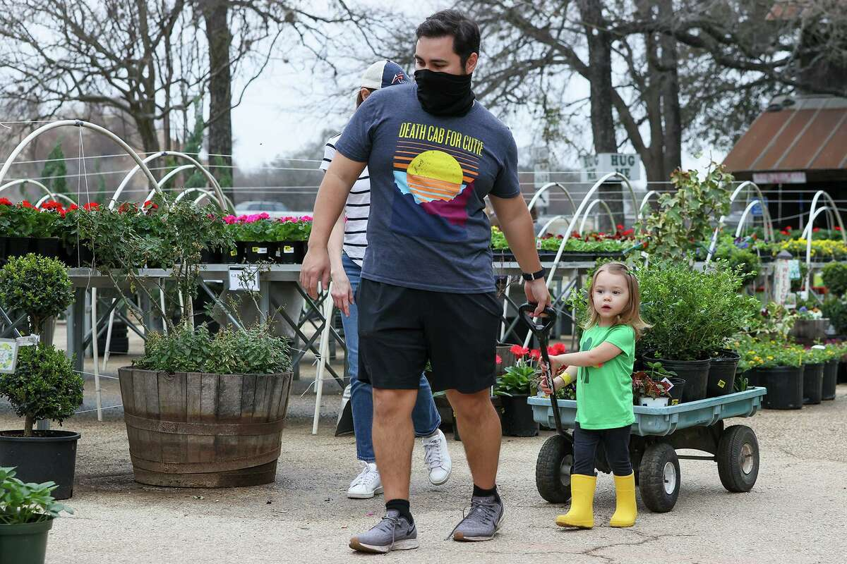 Alex Reyes, 2, help her parents, David and Beth Reyes, look to replace plants killed by the arctic storm at Milberger's Landscaping and Nursery.