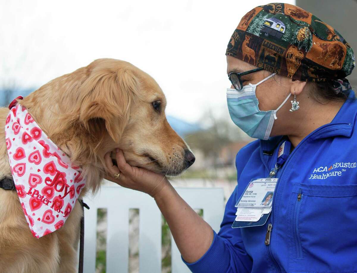 Lutheran K-9 Ministry's Joy the Comfort Dog receives some love from ER registered nurse Sonia Irby outside HCA Healthcare Clear Lake on Monday, Feb. 8, 2021, in Webster, Texas.