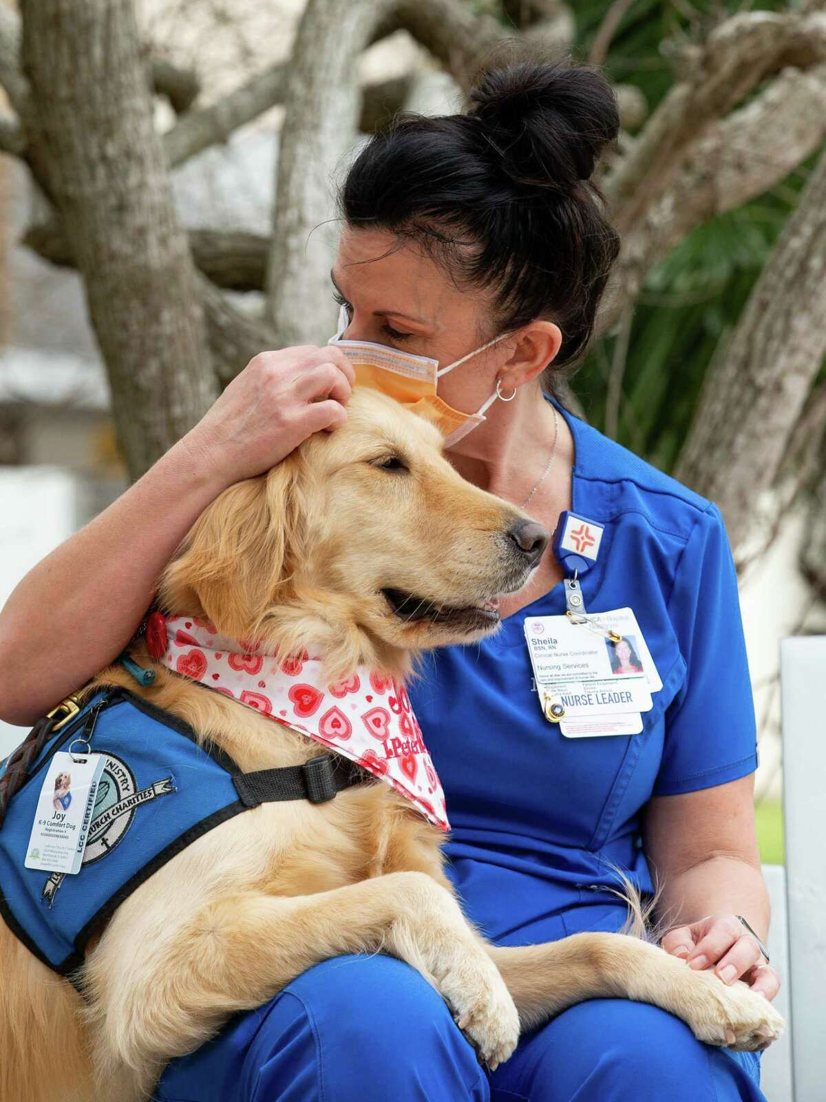 Lutheran K-9 Ministry's Joy the Comfort Dog receives some love from registered nurse Sheila Rios outside HCA Healthcare Clear Lake on Monday, Feb. 8, 2021, in Webster, Texas.