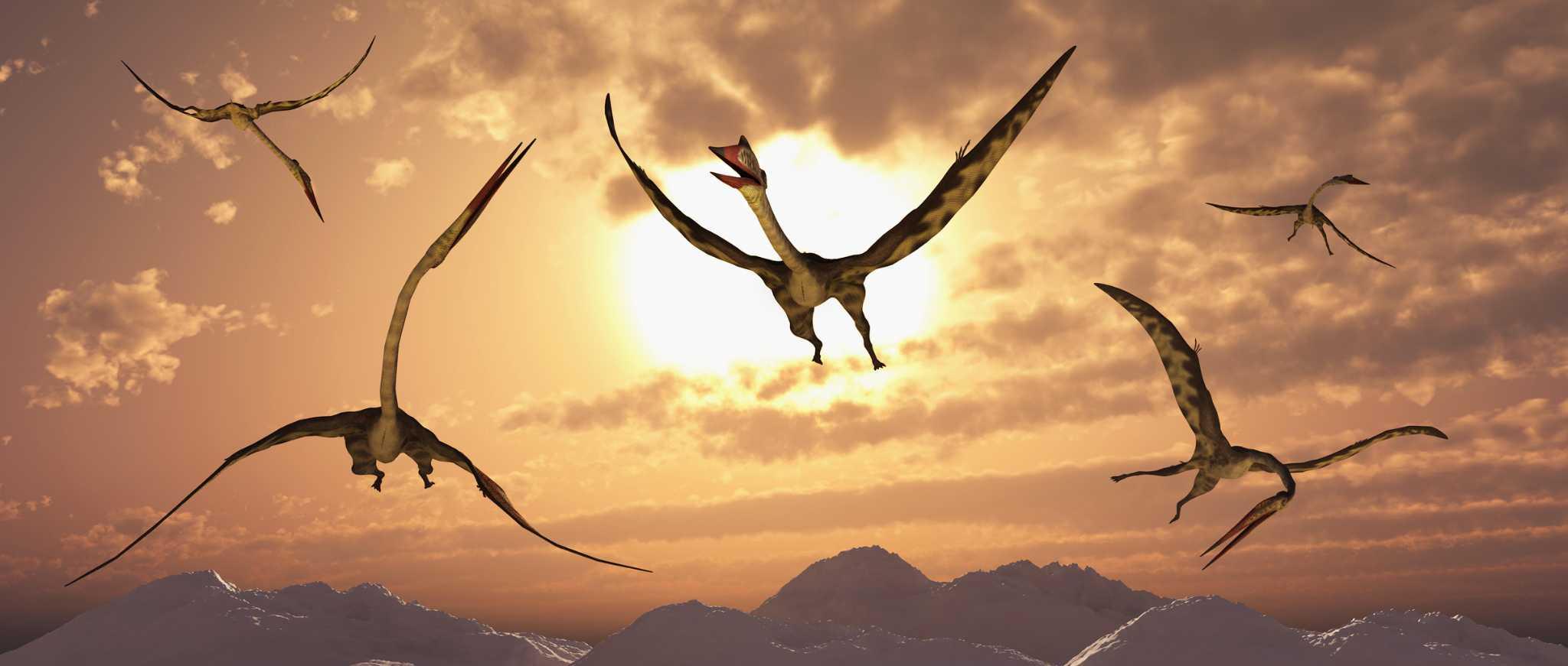 San Antonio,was home to biggest flying 'dinosaur' ever