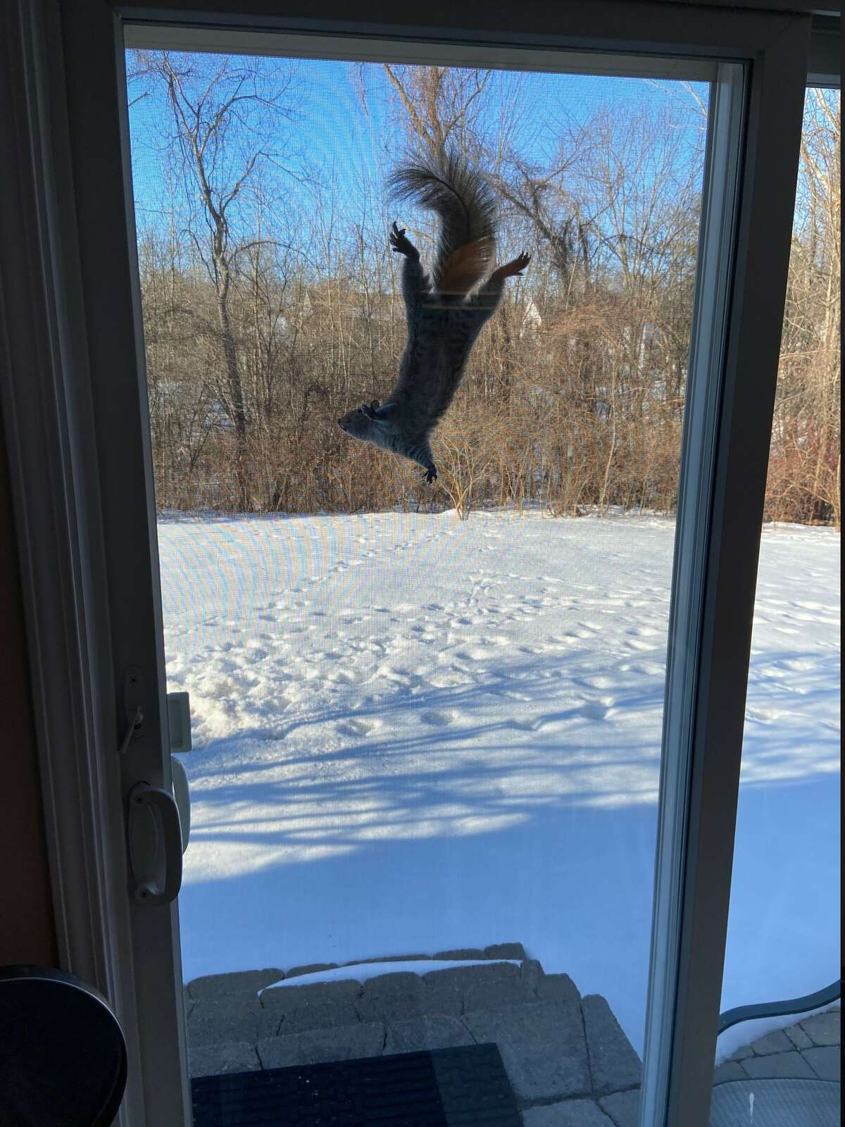 Tired of winter, this squirrel looks for some warmth as it appears on Joe Flynn's patio back door in Selkirk.