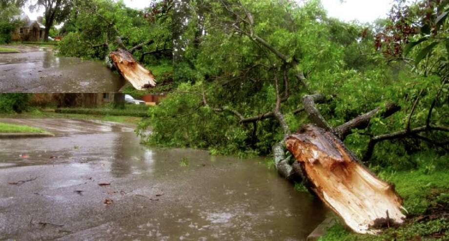 A tree branch broken from its trunk by Tropical Storm Hermine lies on its namesake, Hermine Boulevard, in San Antonio, Sept. 7, 2010.