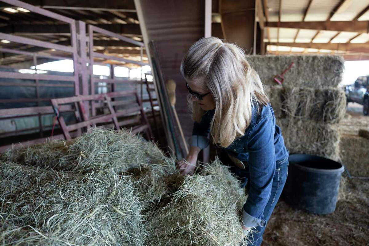 Director Darla Weaver grabs hay to feed her cattle at Three Cross Ministry, Tuesday, March 2, 2021, in Montgomery. Lone Star Cowboy Church's Three Cross Meat Ministry, formerly Lone Star Beef, has a goal to provide 72,000 meals in 2021.
